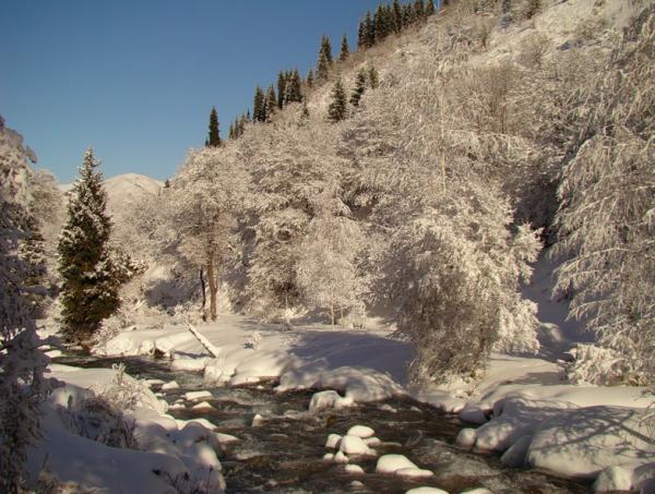 Женский пуховик недорого зима