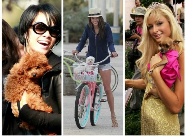 Девушки с маленькими собачками фото